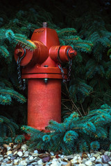 Fire Hydrant Pine tree