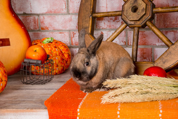 Still life to day of thanksgiving with autumn vegetables, fruit, pumpkin, wheat and funny,cute rabbit, bunny.Hello Autumn.Brown Rabbit and red apples.Happy Thanksgiving set with animals