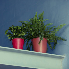 Two plants on metal balk or timber in loft space. Interior design and decoration.