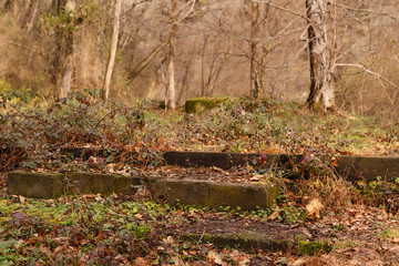 old moss-covered well in the winter forest of the park Sochi