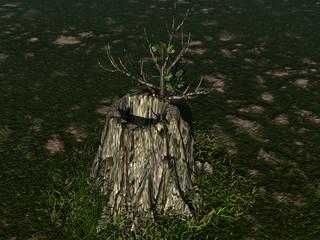 Alter modernder Baumstumpf auf Wiese