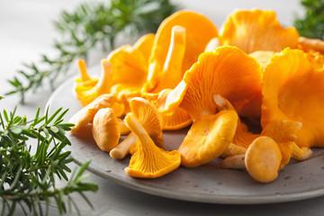 Fototapeta raw fresh chanterelle mushrooms on gray background obraz