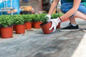Planting and caring for new plants