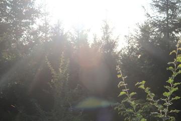 Fotobehang Bamboo arbres