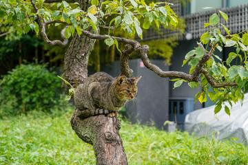 木に登っているネコ
