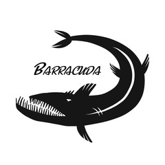 Barracuda fish for your design