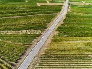 Landstraße durch die Weinberge