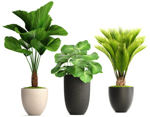 Poster Planten collection of ornamental plants in pots