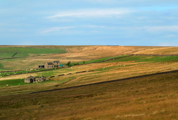 A panoramic sunlit pennine landscape with typical yorkshire dales stone walls and farmhouses and sheep grazing in the fields