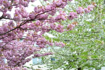 Frühling&Wonne