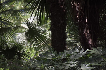 Palm trees in the botanical garden