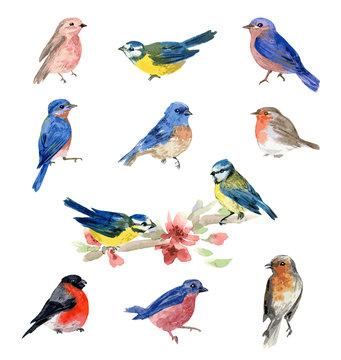 Watercolor bird illustrations