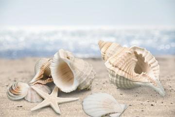 Seashell on sandy seacoast. Travel concept