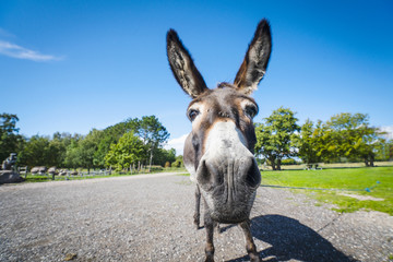 Funny donkey close-up standing on a road
