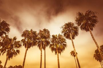 Monochrome golden toned palms of Venice beach