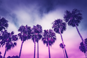 Monochrome ultraviolet toned palms of Venice beach