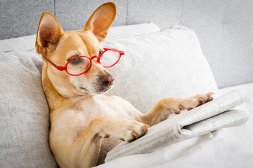 dog in bed reading newspaper