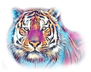 tiger art illustration color