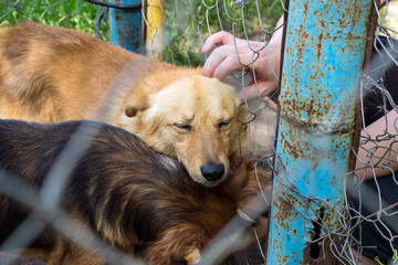 Shelter for stray dogs. Homeless dog in aviary is happy with new owner. Volunteers hand with homeless dog outdoors. Concept of volunteering and animal shelters