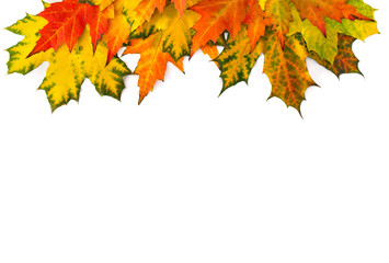 Aluminium Prints Autumn Yellow and orange beautiful autumnal maple leaves on a white background with space for text. Top view, flat lay