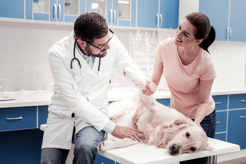 Health consultation. Handsome brunette man sitting on the table and bowing head while looking at domestic pet