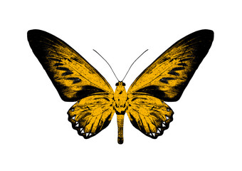 Silhouette of a yellow butterfly isolated on white background.