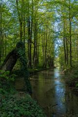 zarośnięty kanał w starym parku