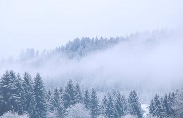 Papiers peints Forets winter coniferous forest in fog