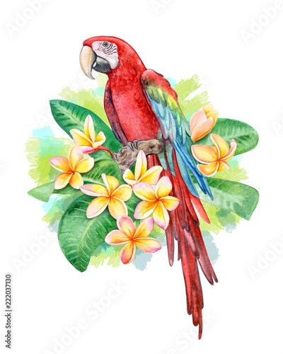 Red-and-green winged macaw  Parrot Birds sitting in
