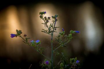 tajemnicze kwiaty