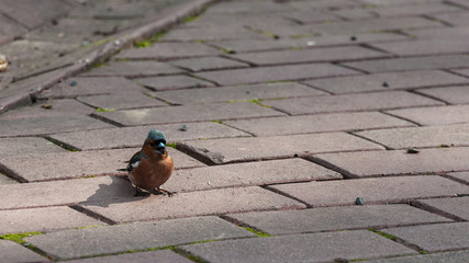 A bird on the sidewalk