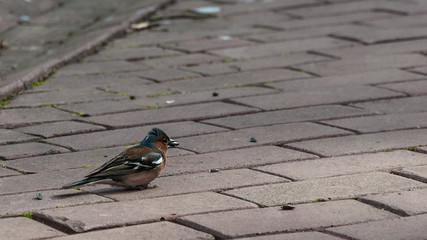 A bird on the sidewalk