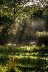 Foggy morning in a swamp forest with beautiful sunlight