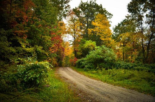 Autumn Day Landscape