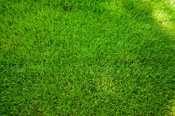 Perfectly mowed fresh garden lawn in summer. Green grass with sunspots.