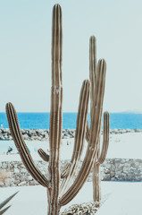 natural poster. cactus and ocean