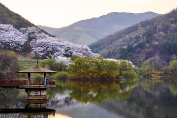 Spring In Yongbiji, In Korea
