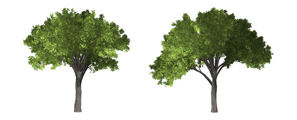 The collection of tree. Tropical tree isolated on white background with clipping path.