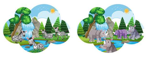 Set of zebra and rhinos in enviroment