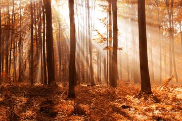 Zelfklevend Fotobehang Diepbruine Autumn forest landscape