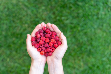 High angle top view close up cropped photo of person lady hands hold red raspberries isolated on green vivid, shine background with copy space for text
