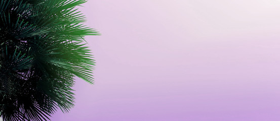 Wall Mural - Website heading and banner with copy space in light violet color and palm tree. Concept of Los Angeles and cheap travel agency,tourism and summer vacations, blog header.