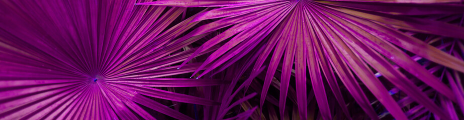 Wall Mural - Exotic website banner of tropical violet palm leaves. Concept of travel agency, jungle theme and blog header.