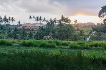 Sunrise in the rice fields of Ubud in Bali, Indonesia.
