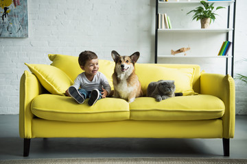 adorable boy with welsh corgi dog and scottish fold cat sitting on yellow sofa at home
