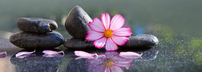Tuinposter Bloemen Black spa stones and pink cosmos flower isolated on green.