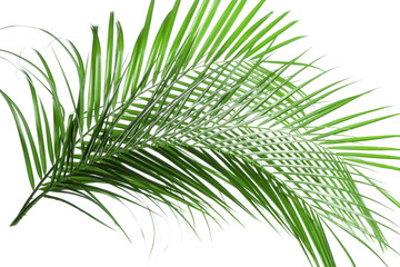 Beautiful tropical palm leaves on white background