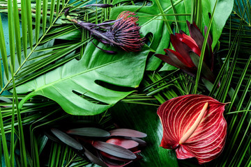 Wall Mural - Beautiful flowers on green tropical leaves