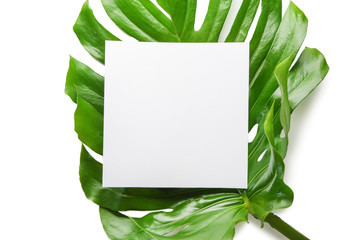 Monstera leaves and blank card on white background