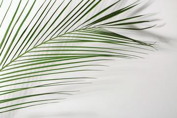Wall Mural - Fresh tropical palm leaf on white background